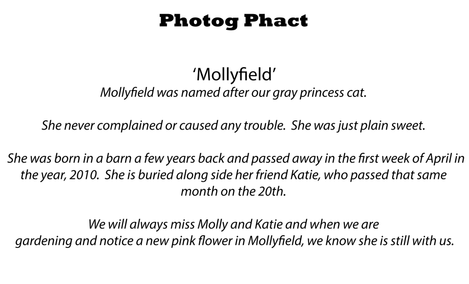 Photog Phact Mollyfield copy